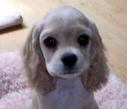 11_24_puppy