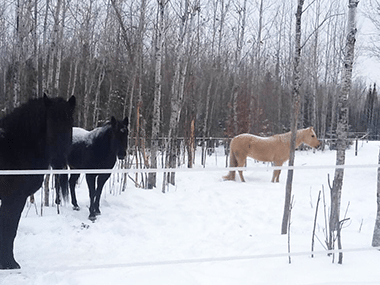 Mary Casanova horses