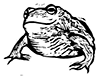 Woodcut frog by Claudia McGehee