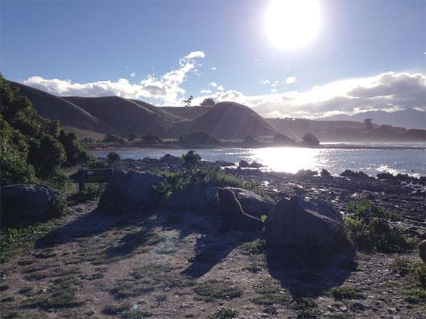 seal among the rocks
